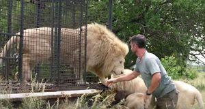 Etter at han leverte en løve tilbake til det fri, går det noen sekunder… Så ble jeg målløs.