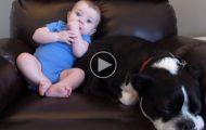 Den lille babyen gjorde i buksen. Følg med på hundens reaksjon. Fantastisk!