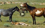 Takket være en sta cowboy har disse hestene fått et helt fantastisk liv.