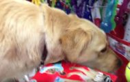 Den mishandlede hunden skal få velge sitt første leketøy. Det hun tar av hyllen får hjertet til å smelte.