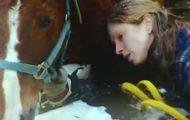 Hun falt gjennom isen med sin blinde hest. Det var da hennes lojale hund innså at noe var galt…