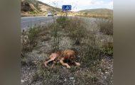 En døende hund i en øde veikant ble oversett i dagevis, men endelig skjedde dette.