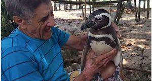 Mann redder døende pingvin og returnerer ham til naturen. Så skjer det mest uventede…