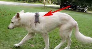 Denne lille pungrotten tviholdt på sin avdøde mamma i grøften. Da kom hunden og gjorde noe fantastisk.