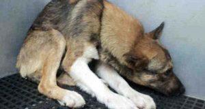 Denne misbrukte hunden trodde han fortjente å dø. Så beviste en familie det motsatte på vakkert vis.