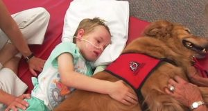 Det denne hunden gjorde for en gutt med traumatisk hjerneskade vil varme deg i sjelen.