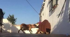 Hunden savnet eieren noe helt forferdelig. Men se hvilken overraskelse som ventet under teppet.
