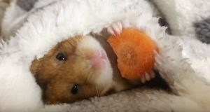 Denne hamsteren tar helgekosen til et helt nytt nivå.