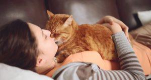 Hvis katten din viser noen av disse tegnene, betyr det at den virkelig elsker deg. Kjempemye.
