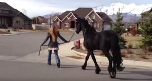 Hun går en tur gjennom nabolaget med sin hest, men vent til du ser dem forfra.