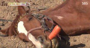Denne dramatiske hesten spiller død hver gang noen prøver å få ham til å gjøre noe.