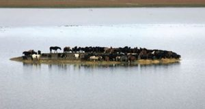 Hundre hester fanget på en øy gikk en sikker død i møte. Så gjør 6 kvinner det UTENKELIGE.