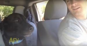 Aldri har jeg sett noe lignende som det denne hunden gjør i bilen. Jeg måtte se det om igjen mange ganger.