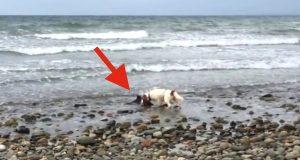 Han hørte hunden sin bjeffe i panikk og visste han måtte handle raskt. Han forventet aldri å finne DETTE.