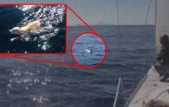 De var ute på sjøen da de så noe merkelig komme svømmende mot dem i bølgene…