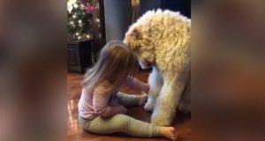 Da hun satt seg ned foran hunden sin, forventet jeg ikke noe sånt som dette. Så søtt.