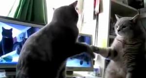 21 millioner mennesker er enige om at dette er den morsomste kattefilmen som finnes.