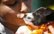 Verdens fineste festival finner sted i Nepal – der hyller de hunder for deres lojalitet og kjærlighet.