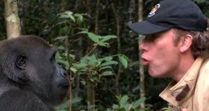 Han slapp gorillaen Kwibi ut i frihet. Reaksjonen når de møtes fem år senere er vidunderlig.