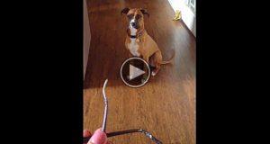 Mamma finner sine opptygde briller. Når hun konfronterer hunden er reaksjonen hans hysterisk.