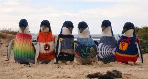 Bakgrunnen for at disse australske pingvinene dukker opp i strikkegensere vil forbløffe deg.