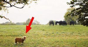 Det eieren gjør når han ser at den lille ponnien er så trist og ensom, er gripende.