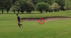 En slu rev sniker seg inn på golfbanen. Plutselig legger han på sprang med DETTE.
