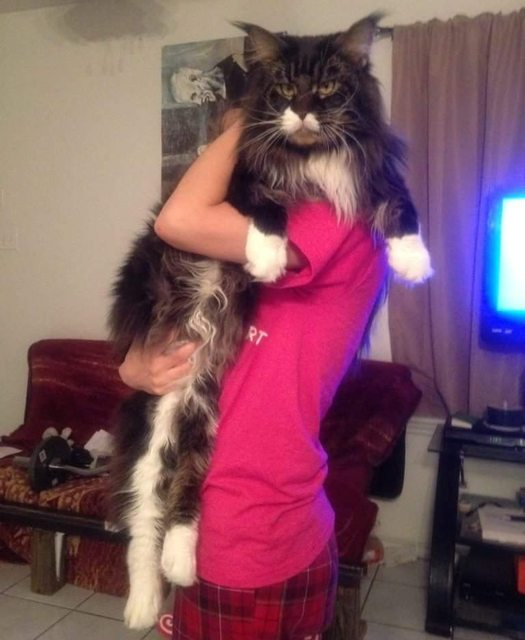 store-katter (1)