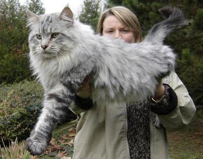 store-katter (3)