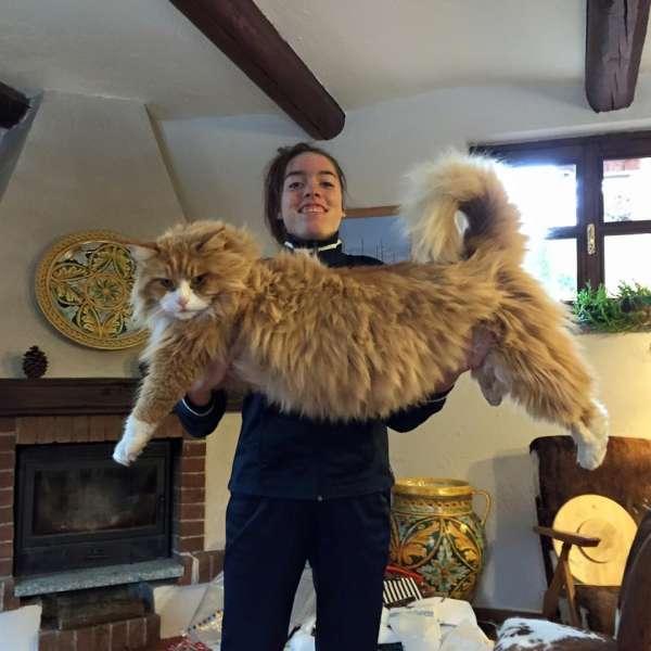 store-katter (4)