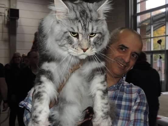 store-katter (5)