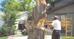 Det ser ut som han skal sage ned treet, men når han er klar gjør han alle naboene grønn av misunnelse.