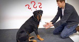 Magikeren tryller bort hundegodbitene i hendene sine. Hvordan de reagerer? Strålende.