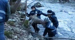 De dro en forfrossen ulv ut av en iskald elv. Det neste som skjedde fikk meg til å grine som et barn.