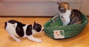 Den herlige valpen prøver desperat å få tilbake sengen sin. Katten kunne ikke brydd seg mindre!