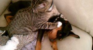 Matmor tar valpen hjem fra dyrlegen. Hvordan katten reagerer, overrasker til og med henne.