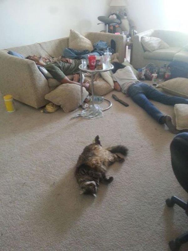 26 - Til og med katten fikk seg en runde for mye.