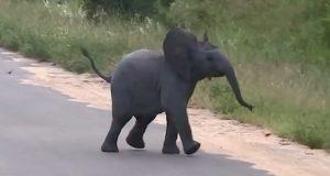 Hun finner en elefantunge. Når hun innser hva den driver med, smelter hjertet hennes.