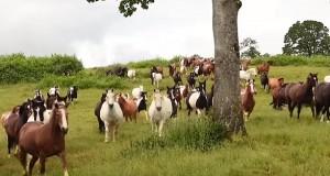 Disse 200 hestene ble endelig sluppet fri, og du må se reaksjonen deres. Jeg fikk hakeslepp.