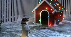 Denne hunden venter på julenissen. Hva han gjør for å forberede seg på besøket? Bedårende.
