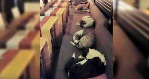 Det denne kaféen gjør for disse løshundene hver natt, varmer virkelig hjertet mitt.