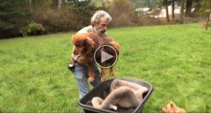 Denne stakkars hunden var fastlenket i 14 lange år. Men se hva denne mannen gjør. TÅRER.