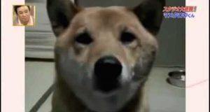 Hun forteller sin hund å bjeffe stillere. Så gjør hunden dette, og vi kan vi ikke slutte å le.