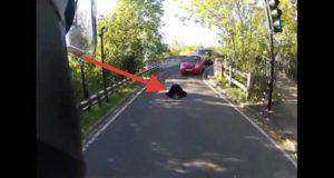 Det han så ligge midt i veien sjokkerte alle. Det han deretter gjorde? Respekt.
