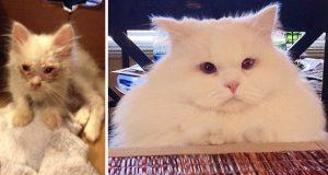 Sultende kattunge reddet fra veikanten overrasker menneskene med sin ekstreme pels.
