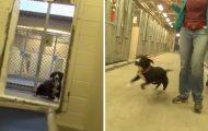 Denne sjenerte kennelhunden TAR HELT AV når han innser at han er blitt adoptert.