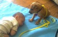 Babyen har sovnet på teppet – se hva valpen gjør da. Noe av det søteste jeg har sett.