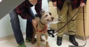 En tidligere blind hund ser familien sin for første gang. Reaksjonen er helt fantastisk.