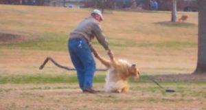 Hun tok en fremmed på fersken i å gjøre dette med hunden sin i parken. Heldigvis filmet hun det…