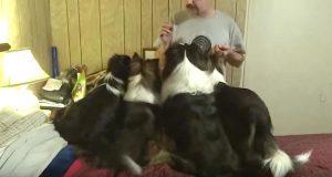Matfar gir dem alle en godbit, men hold et øye med den helt til venstre.